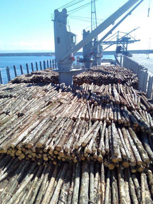 Th.1596.troncos.500x0